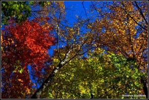 Trees + sky